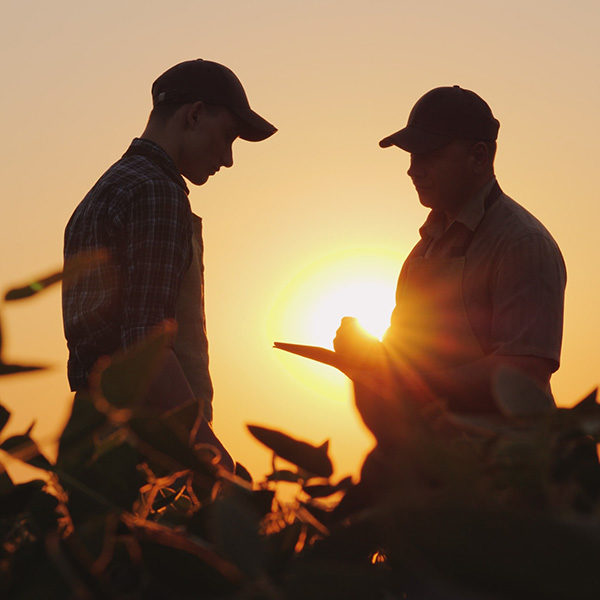 Two farmers talk on the field. Use a tablet.