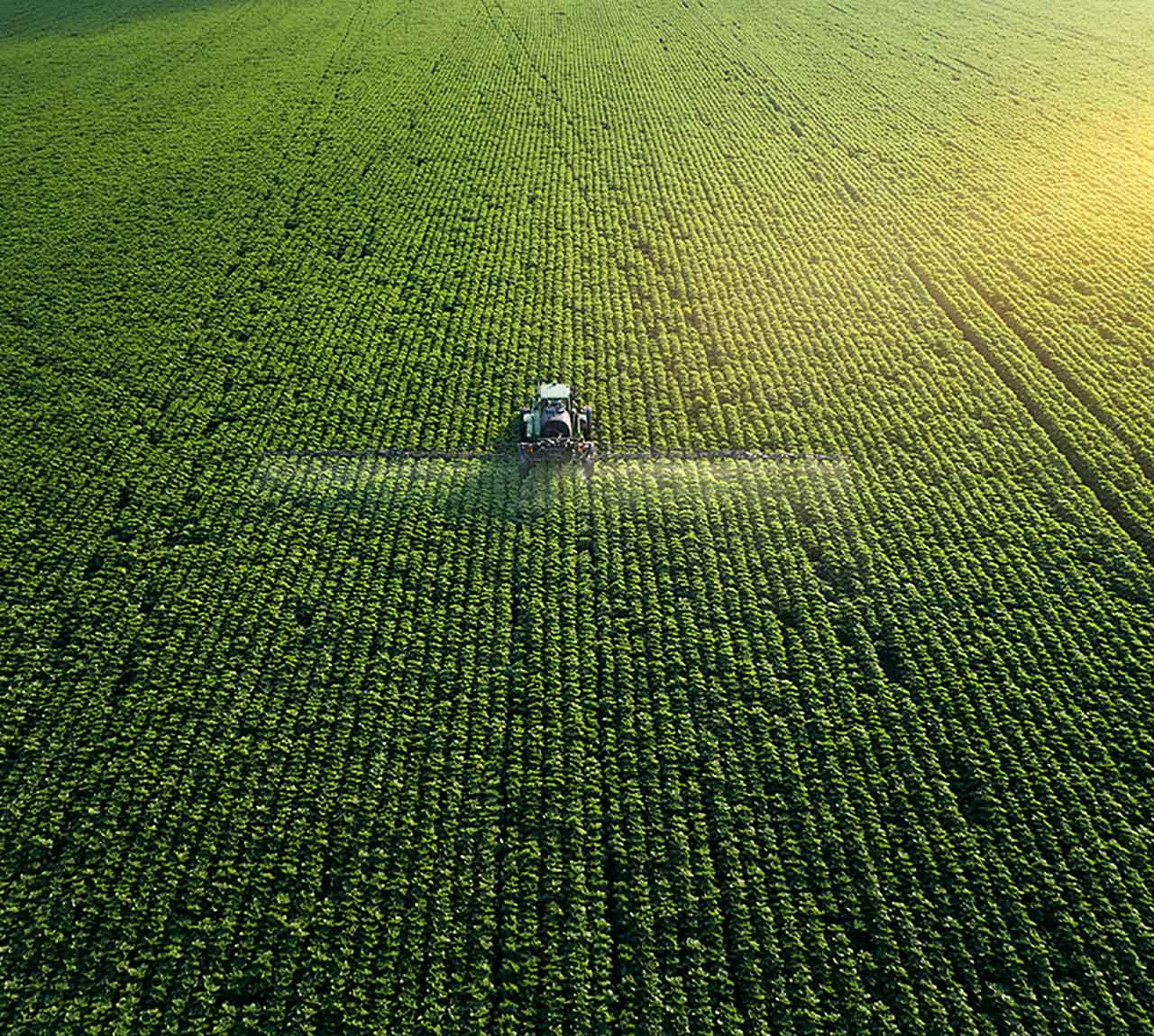 Tracking shot. Drone point of view of a Tractor spraying on a cultivated field. Small Business.